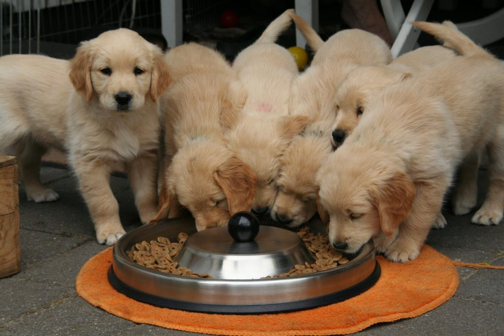 Bien alimenter son chien :  nos conseils