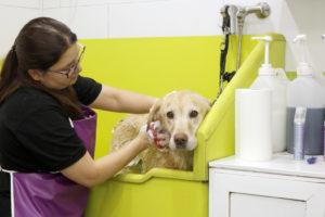 Toiletter mon chien Partie 1 : Brossage et soin