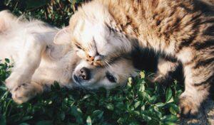 chien chat cohabitation