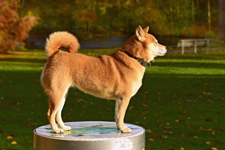 chien dressage