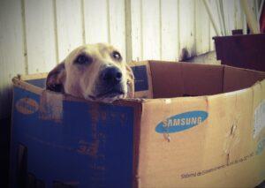 box pour chien