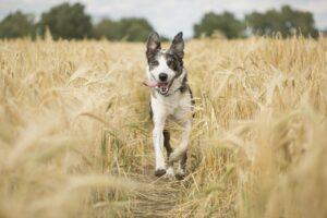 chien articulation cours